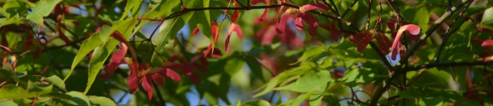 Pflanzen für den Gartenbau