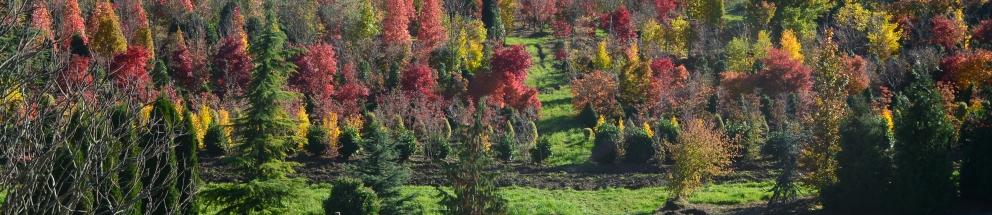 70 Jahre Pflanzen für den Gartenbau