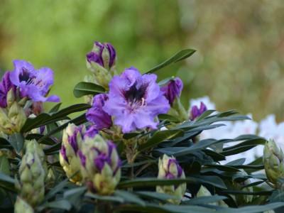 Blühendes Moorbet