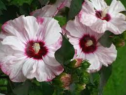 Spätsommerblüten